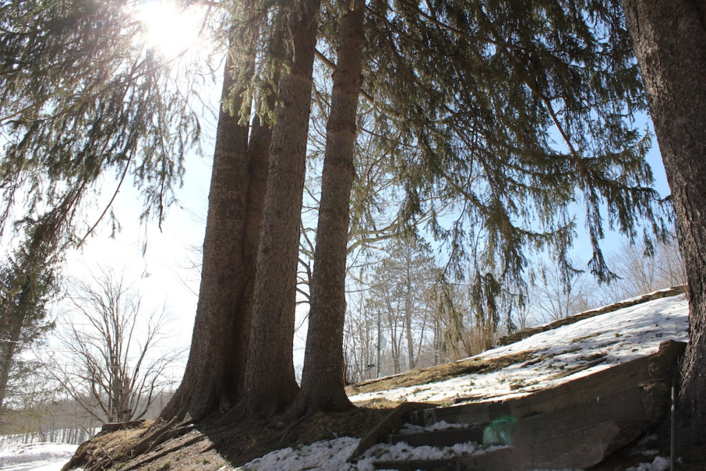 © J.N. Urbanski Underneath the Breezy Hill Hemlock Stand 3/13/15